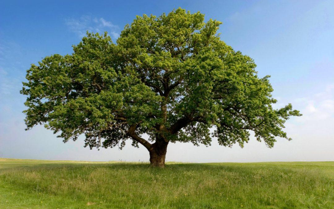 nebraska native trees great