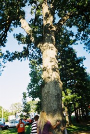 Foliage of one of Buehler Park's trees.