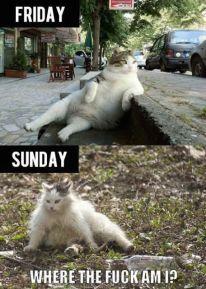 friday-cat-sunday-where-the-fuck-am-i