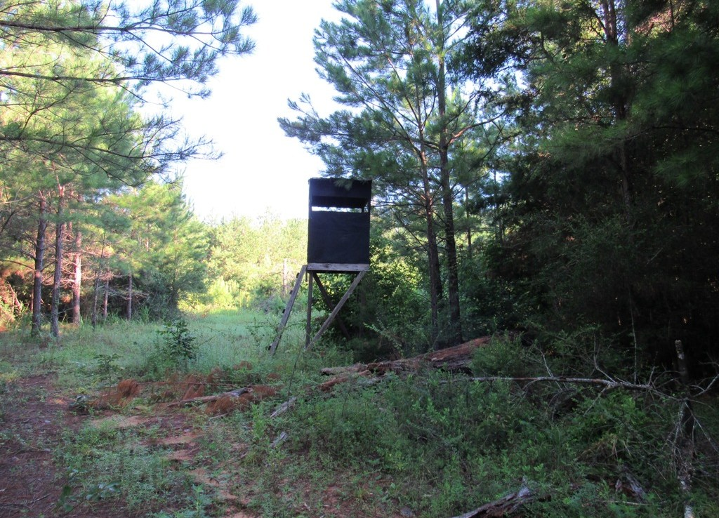 CR-1 West hunting and timber property for sale in Alabama