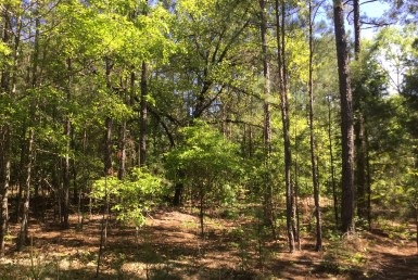 Garrett - Russell property for sale in Alabama