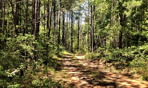 Town Creek 24 acre hunting property for sale