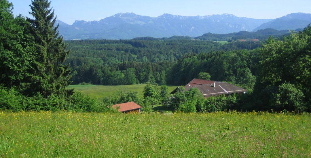 Patti Buff's farm