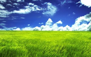 Decorative image of grass with the following caption: