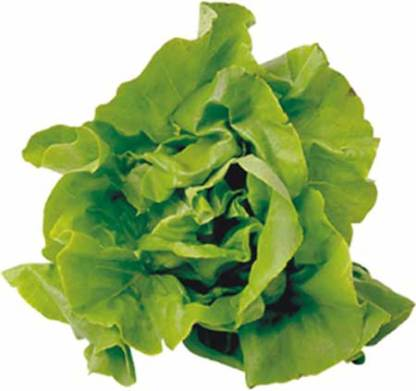 Leafy Vegetables Supplier & Exporter India | Greeble Agro Export