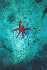red sea star in Koufonissi