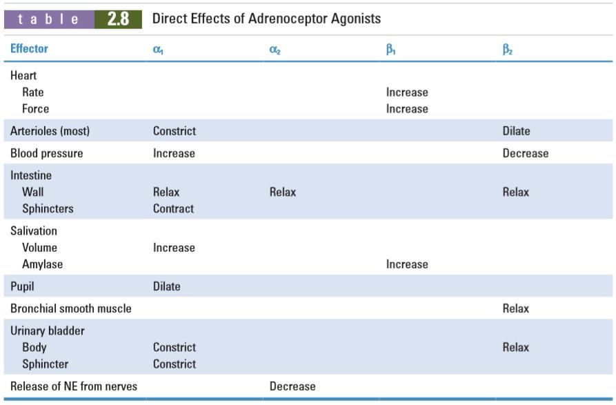 18. Adrenergic receptor agonists – greek.doctor