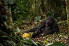 The-good-life-©-Daniel-Nelson-Wildlife-Photographer-of-the-Year-800x534