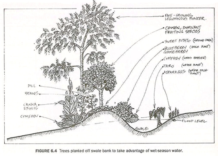 How to plant out swales for maximum benefit