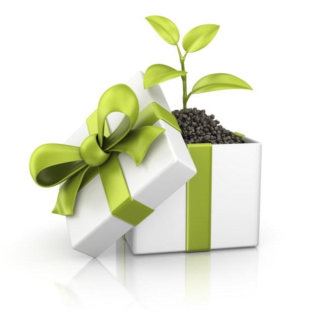eco-friendly-gift