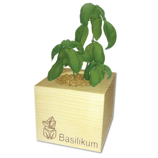 ecocube_bailikum_pflanze