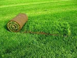 Рулонный газон в Чернигове