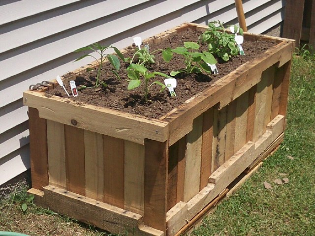 Raised Bed Garden Using Wooden Pallets