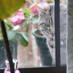 猫も恋する季節