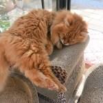 二年越しのアマリリスと長生き猫の日課