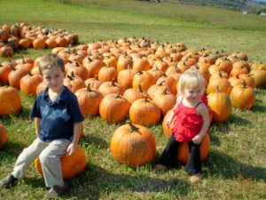 Pumpkin cups for a delicious fall dessert! #pumpkin #fall #desserts #recipes
