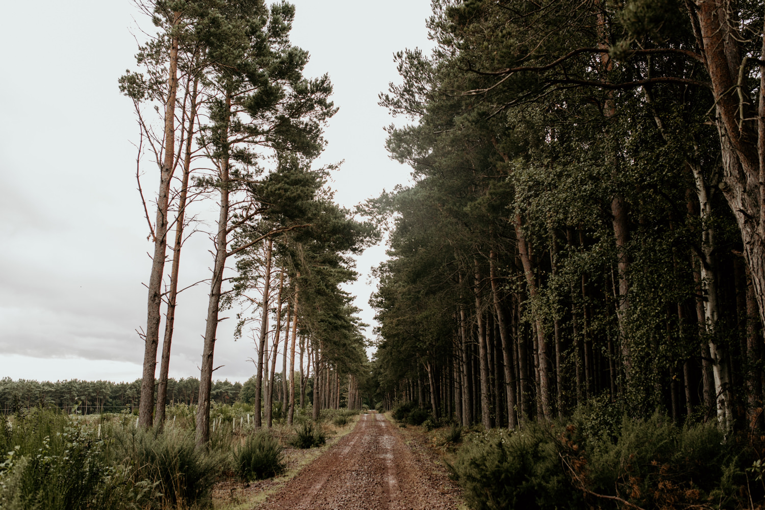 path through the forest at Harvest Moon Holidays Scotland