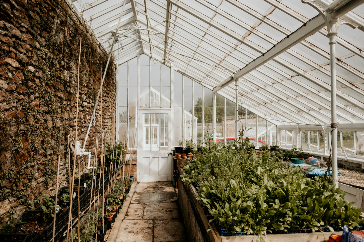 inside the greenhouse at Coombe Lodge Blagdon