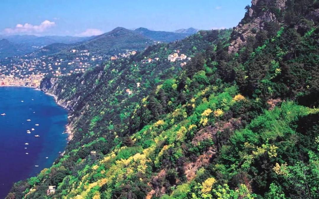La vegetaci n mediterr nea faddi nassar - La mediterranea ...