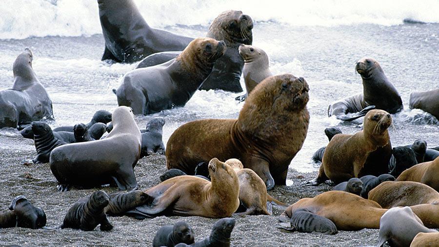 Des scientifiques mexicains traitent des cas de cancer des lions de mer