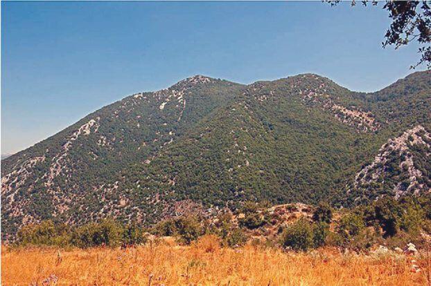 أضف مقالتك «محمية جبل موسى» في جبل لبنان: فسيفساء بيئية ومقصد سياحي نادر