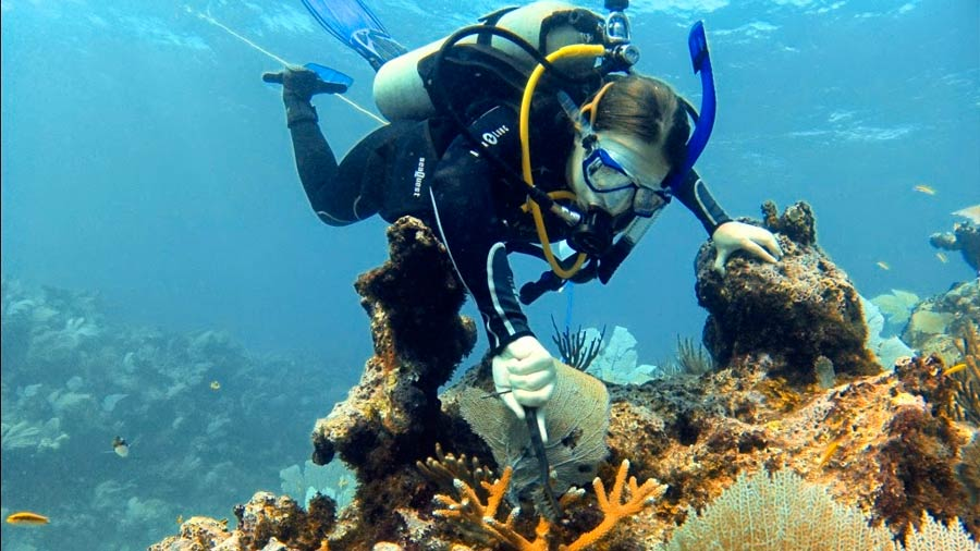 Mexican biologist creates methodology to restore coral reefs