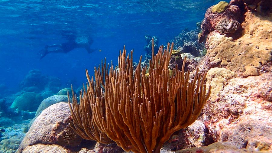 "Climate change could not be ""fatal"" for all corals"