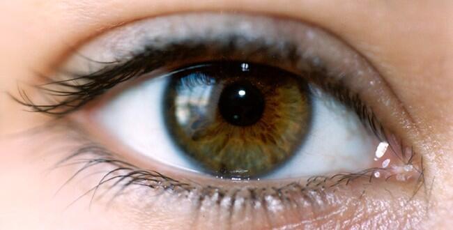 الجزء الوحيد من جسم الإنسان غير الموصول بشرايين تنقل الدم هو قرنية العين، لأنها تتلقى الأوكسجين مباشرة من الهواء