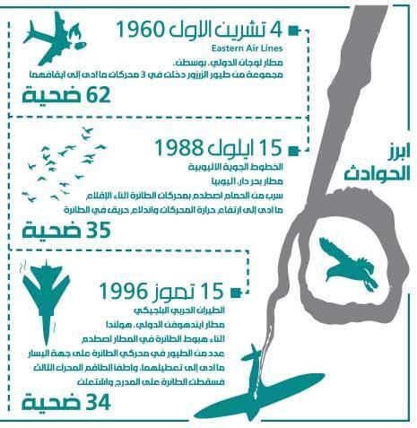 خطر النورس على سلامة الطيران: الدولة «كشّاش» طيور