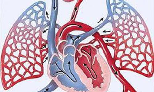 يقطع الدم في جسم الإنسان، بما يعادل مسافة تسعة كيلومترات يومياً في الشرايين والأوردة