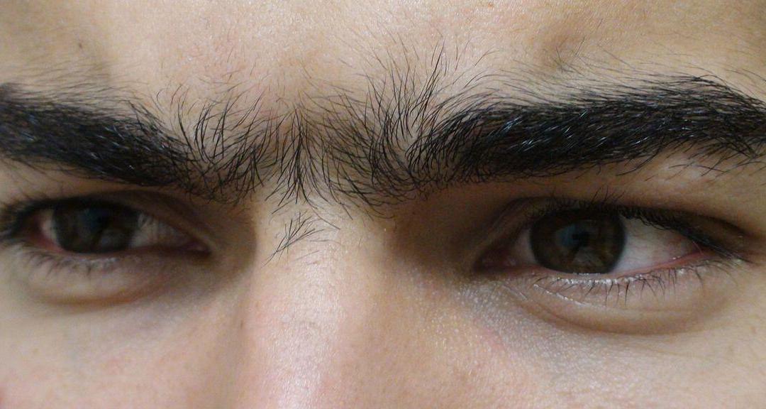 يحتوي حاجب الإنسان ما بين أربعمئة وخمسين شعرة، إلى ستمئة شعرة
