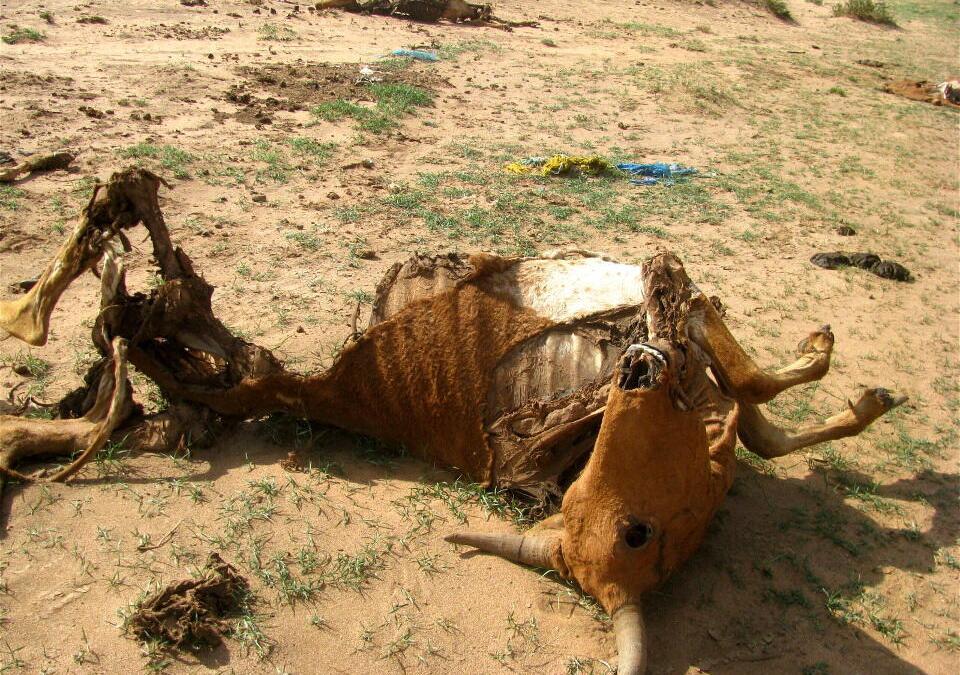 نفوق الحيوانات دون طمرها يهدد المغاربة بأمراض خطيرة