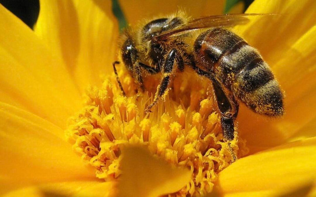 النحل يحلُم مثل البشر