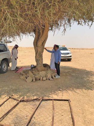 شابان سعوديان يحميان شجرة عمرها 150 سنة من القطع والإهمال