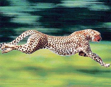 أسرع الحيوانات على الأرض هو الفهد وأسرع المخلوقات هو الصقر حيث تبلغ سرعته أثناء انقضاضه على فريسته من الجو حوالي 360 كلم في الساعة