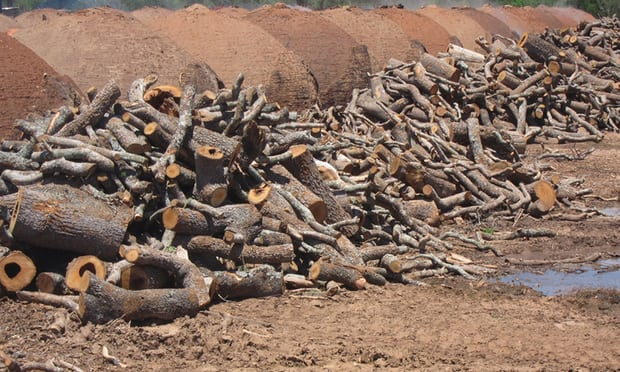Will European supermarkets act over Paraguay forest destruction?