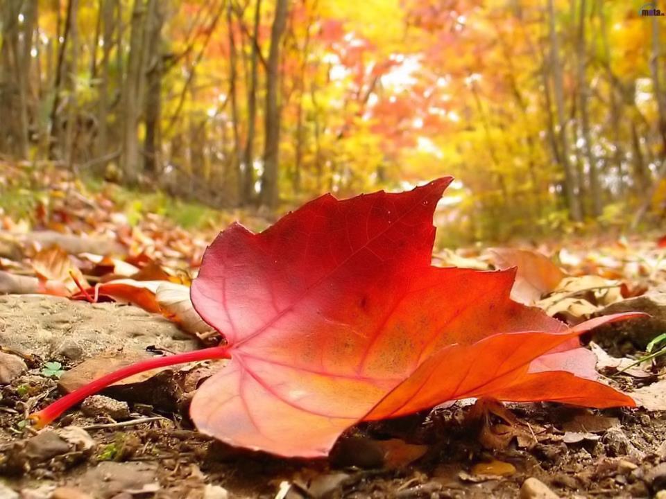 مرحباً بالخريف .. أيلول في طرفه مبلول!