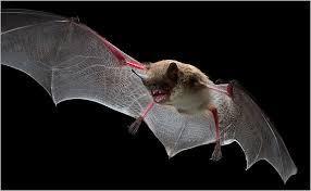 محب الظلمة من الحيوانات ثلاثة : البوم و الخفاش و الخلد