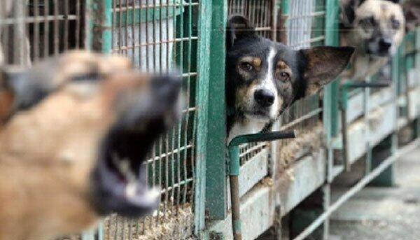 """حقوقيون مغاربة: تهجير الكلاب الضالة سبب رئيسي في إنتشار داء """"الليشمانيا"""" جنوب المغرب"""