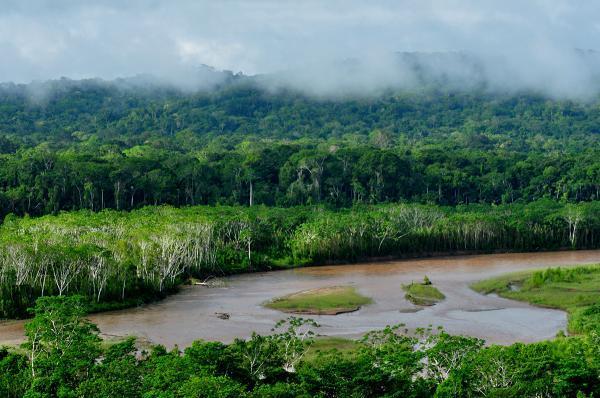 La selva del Amazonas...una gran consecuencias de la deforestación