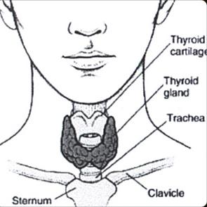Thyroid Optimization in Green Bay, WI