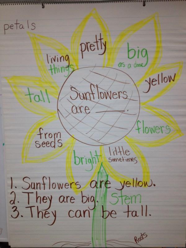 Sunflower Art Green Bean Kindergarten