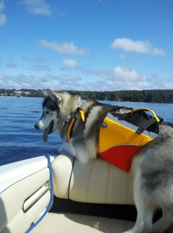 MTI Underdog Dog PFD Life Preserver