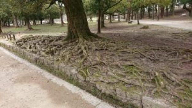 PCMAXで出会った女性と奈良公園で鹿と戯れてきた【神社・寺デート】