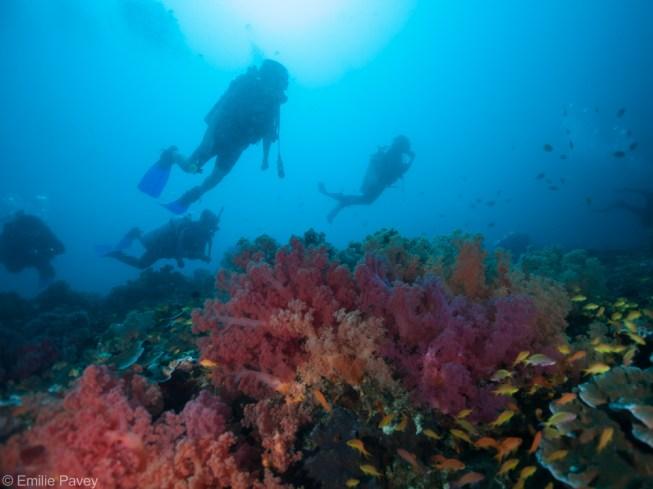 Sunken Island divers moalboal