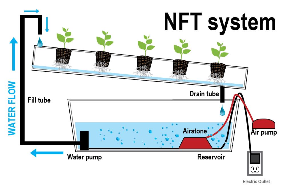Different Indoor Plants