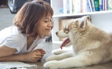 Canine rescue programs