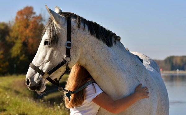 Equine therapy program