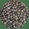 CBD Hemp Seeds