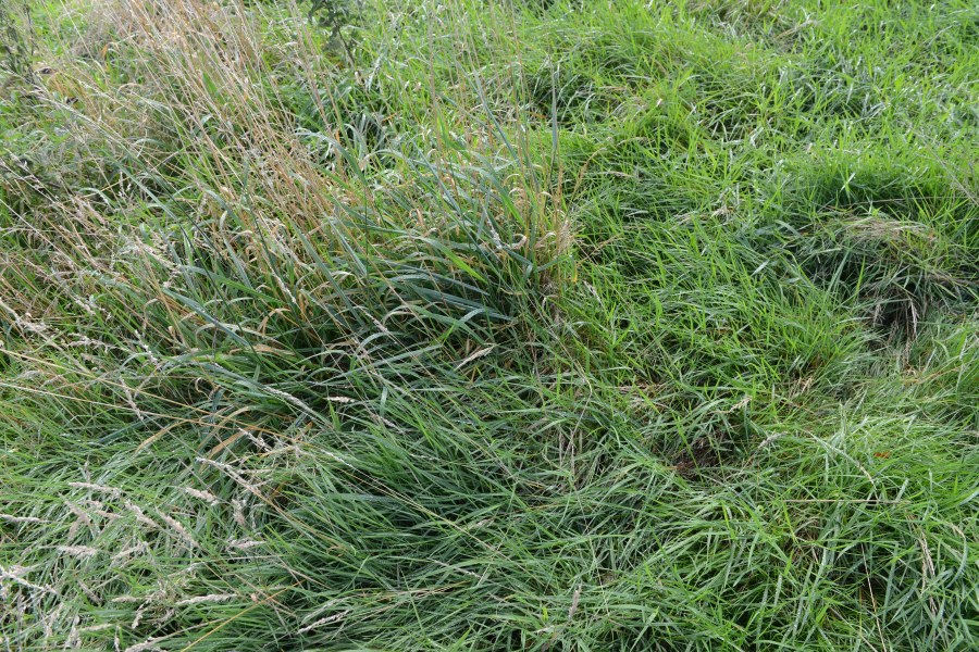 Rescue station untreated rough mr